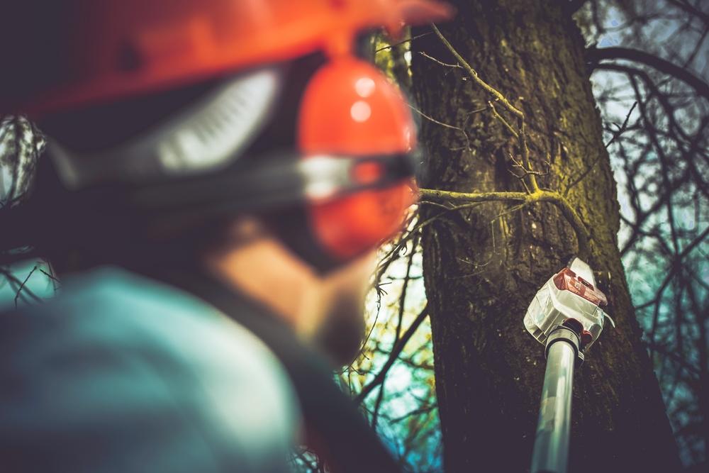 京都の庭の植木撤去にかかる費用相場と注意点