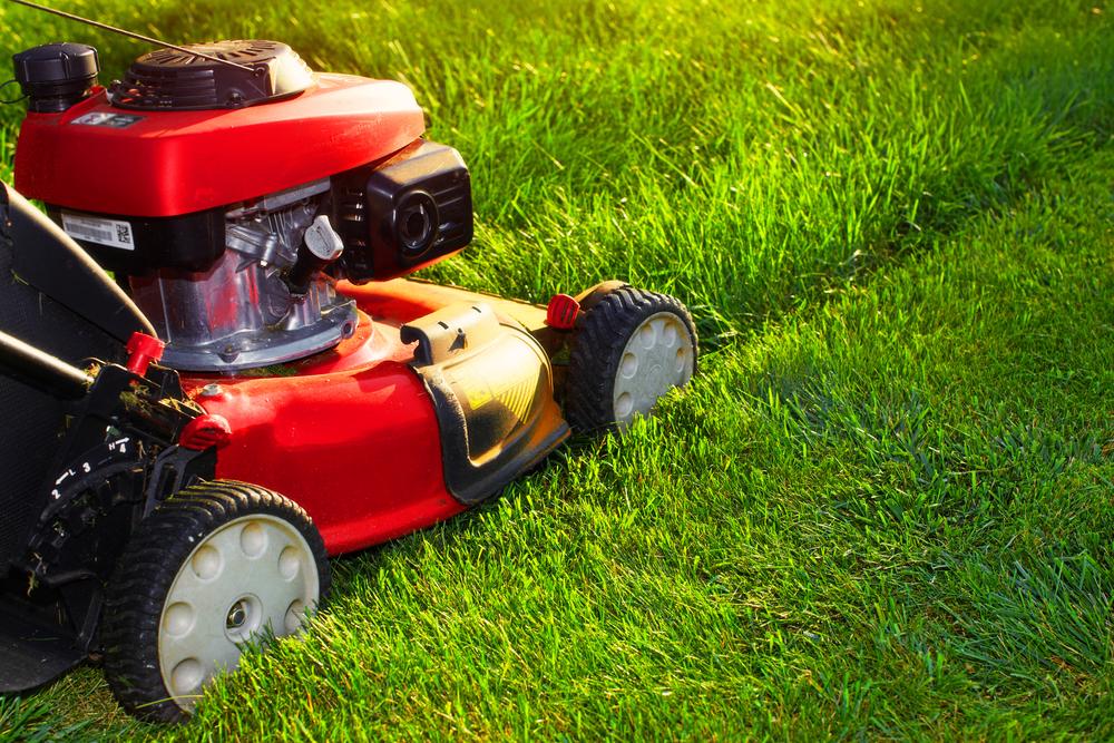 庭の芝生管理の手順・庭の作り方とケア方法について